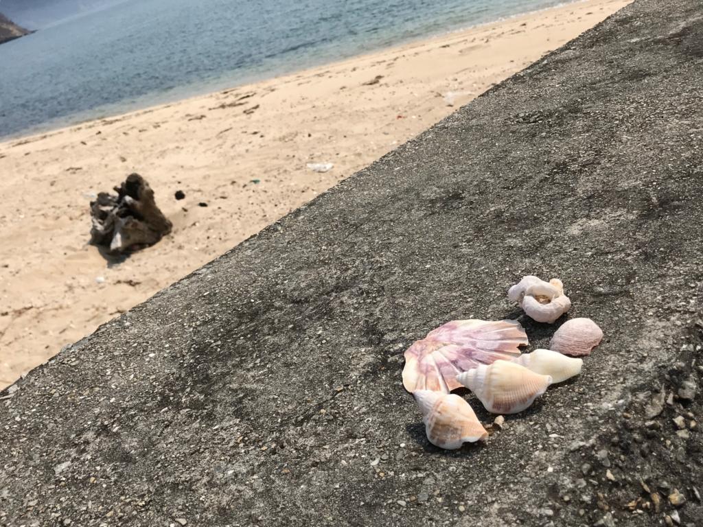 香川県 佐柳島(ねこ島)本浦集落の外れの海岸 拾った貝殻