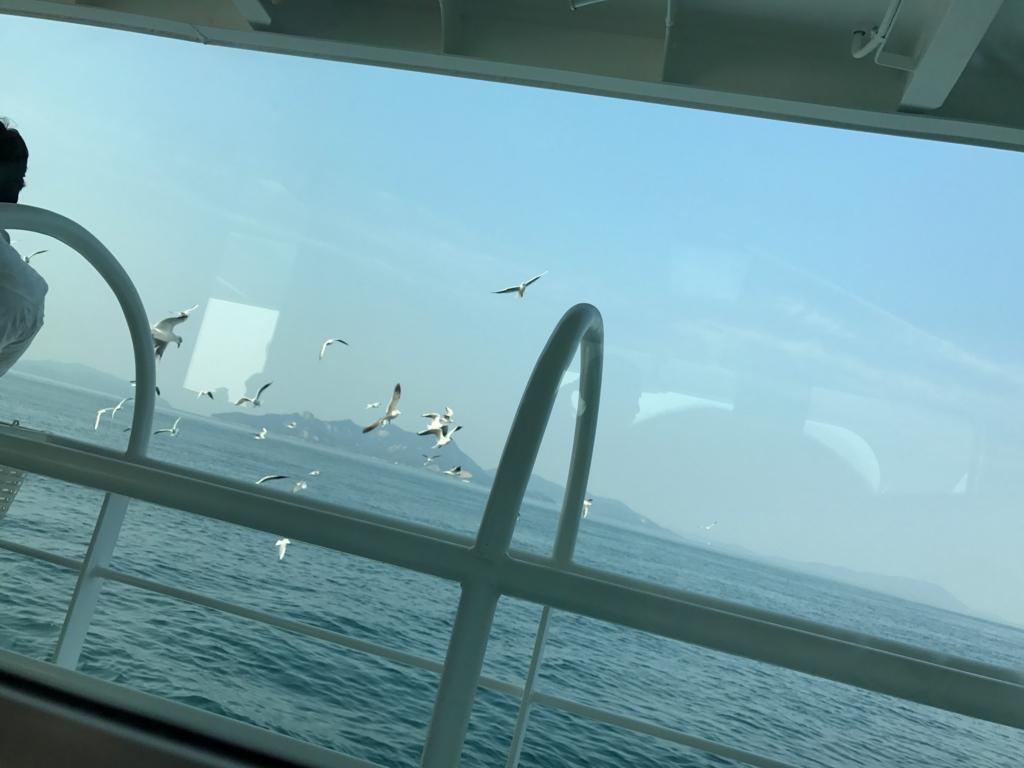 香川県 佐柳島(ねこ島)  多度津港行き フェリー カモメに餌