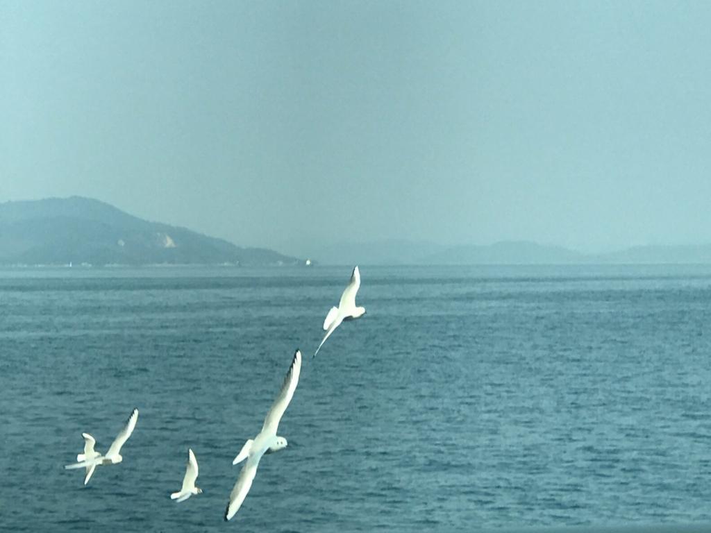 香川県 佐柳島(ねこ島) からのフェリーより カモメ