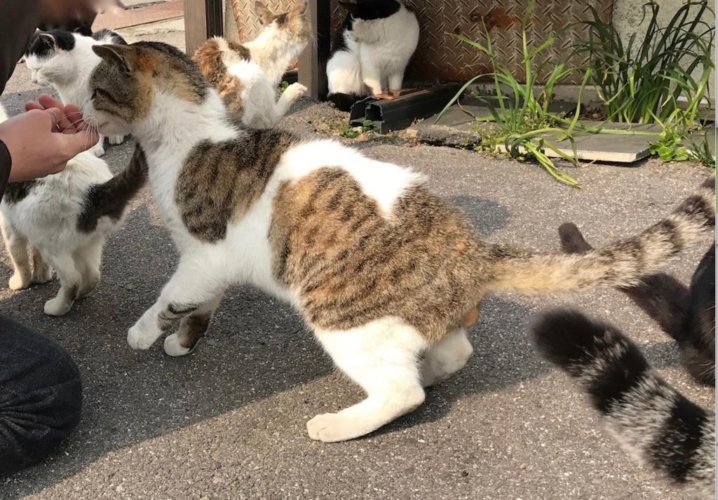 香川県 佐栁島(ねこ島)本浦港 付近 穏やかな 猫さん
