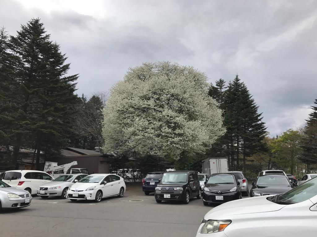 軽井沢のアウトレット(プリンスショッピングプラザ)ゴールデンウイーク 沢山の花々
