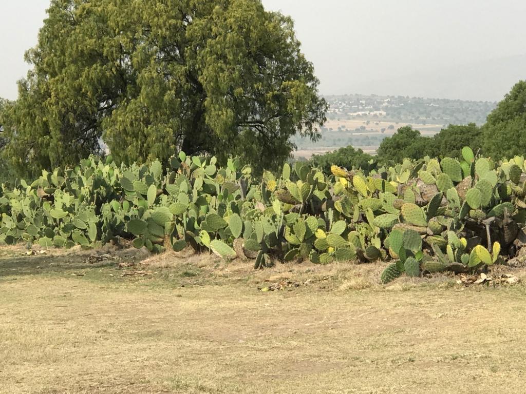 メキシコ 世界遺産 テンプレケ水道橋 サボテン畑