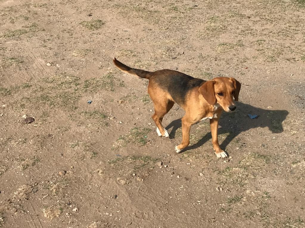 メキシコ 世界遺産 テンプレケ水道橋 1匹の子犬