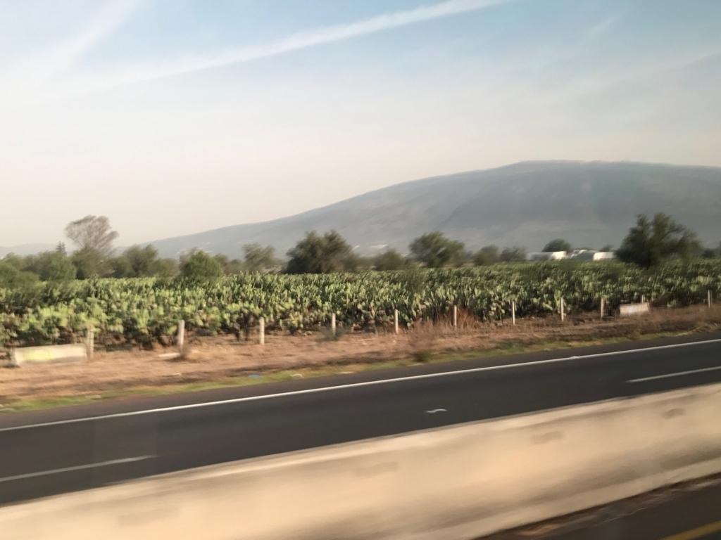 メキシコシティ 郊外 サボテン畑