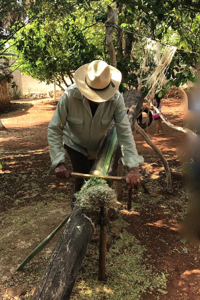 メキシコ サンタ・エレーナ村 マヤ人末裔の方の家 サボテンから繊維 しごきます