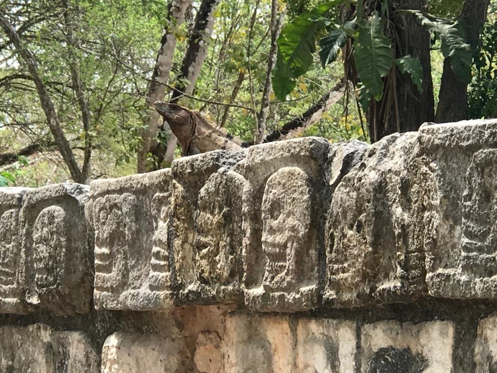 メキシコ チチェン・イッツァ遺跡 頭蓋骨の台座 イグアナ君