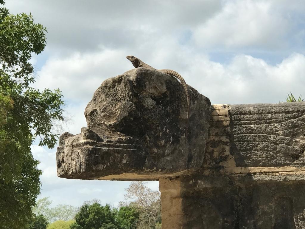 メキシコ チチェン・イッツァ遺跡 ククルカンの頭の上に うイグアナ君