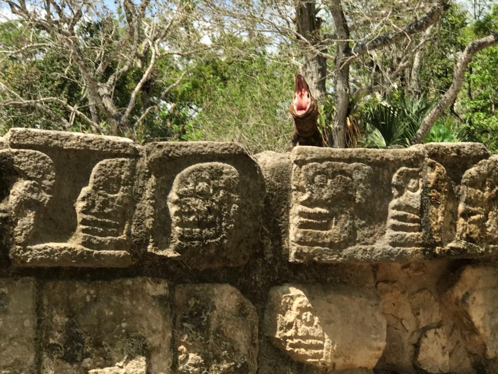 メキシコ チチェン・イッツァ遺跡 欠伸をしているイグアナ君