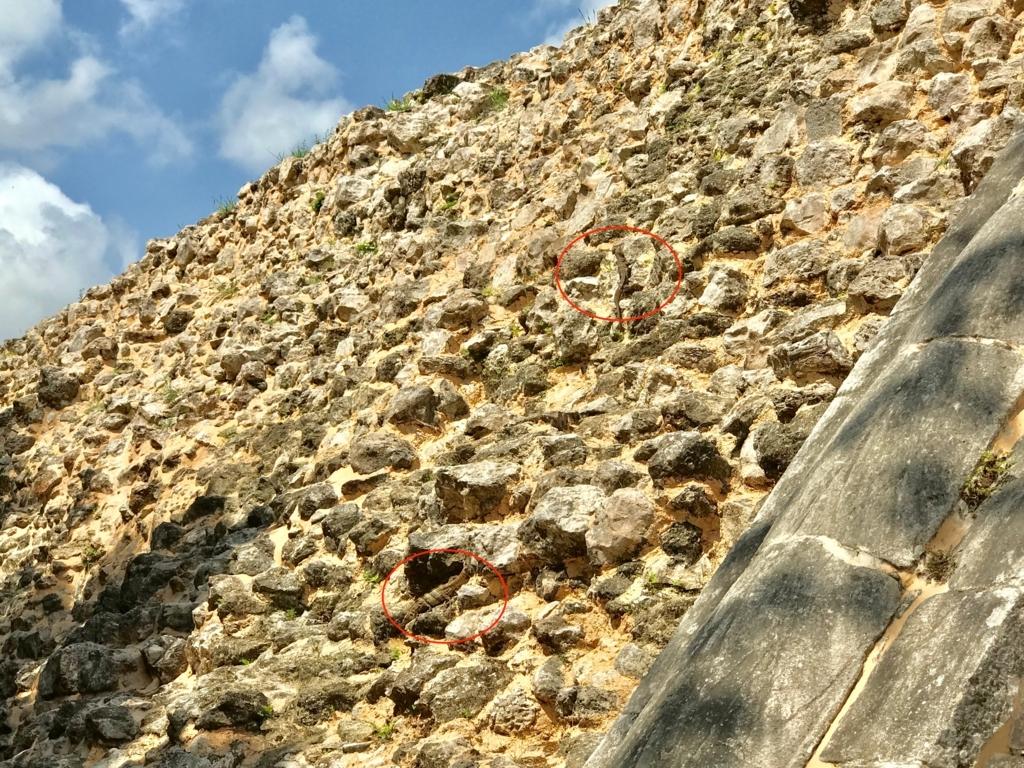 メキシコ チチェン・イッツァ遺跡 球技場の壁の裏側にも イグアナ君
