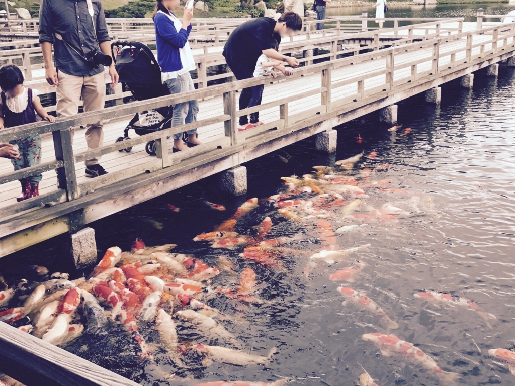 広島県 三景園 大海 鯉の餌やり