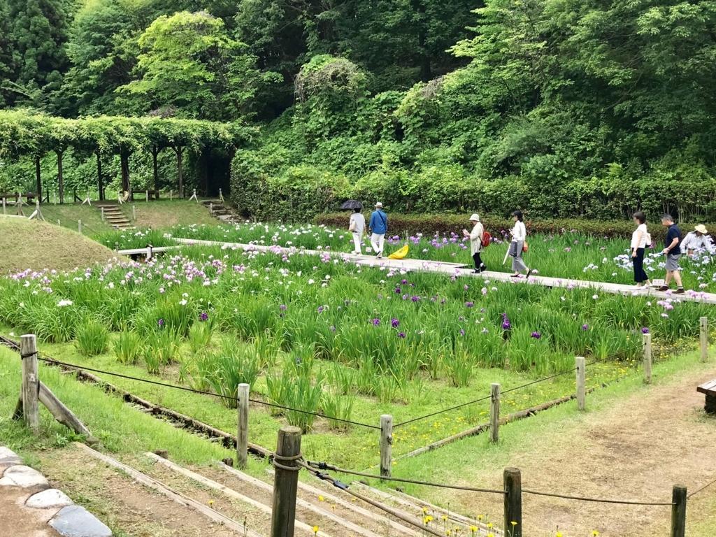 広島県 三景園 ショウブ田
