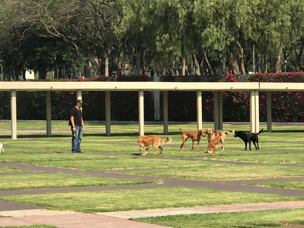 メキシコシティ 国立自治大学 広い敷地 ドックラン?