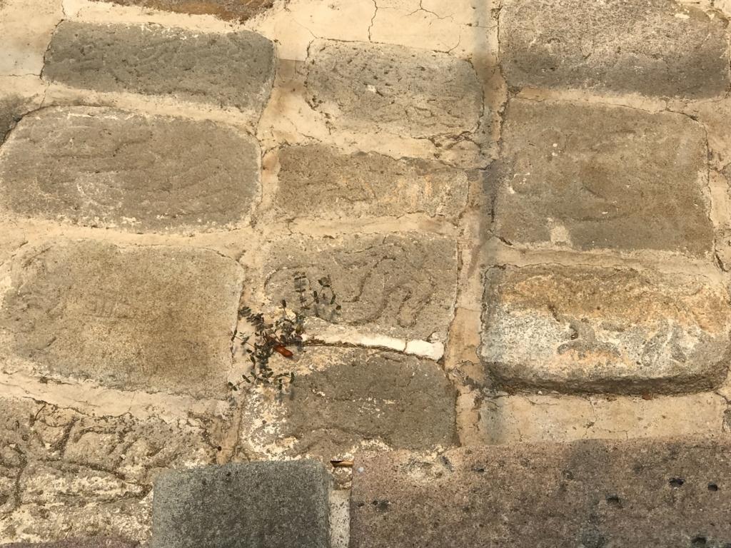 メキシコ ソチカルコ遺跡 動物タイルの道 タイル