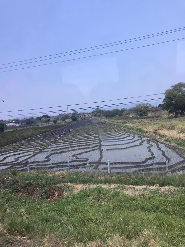 メキシコ クエルナバカ 道路沿いの 面白い形の田んぼ