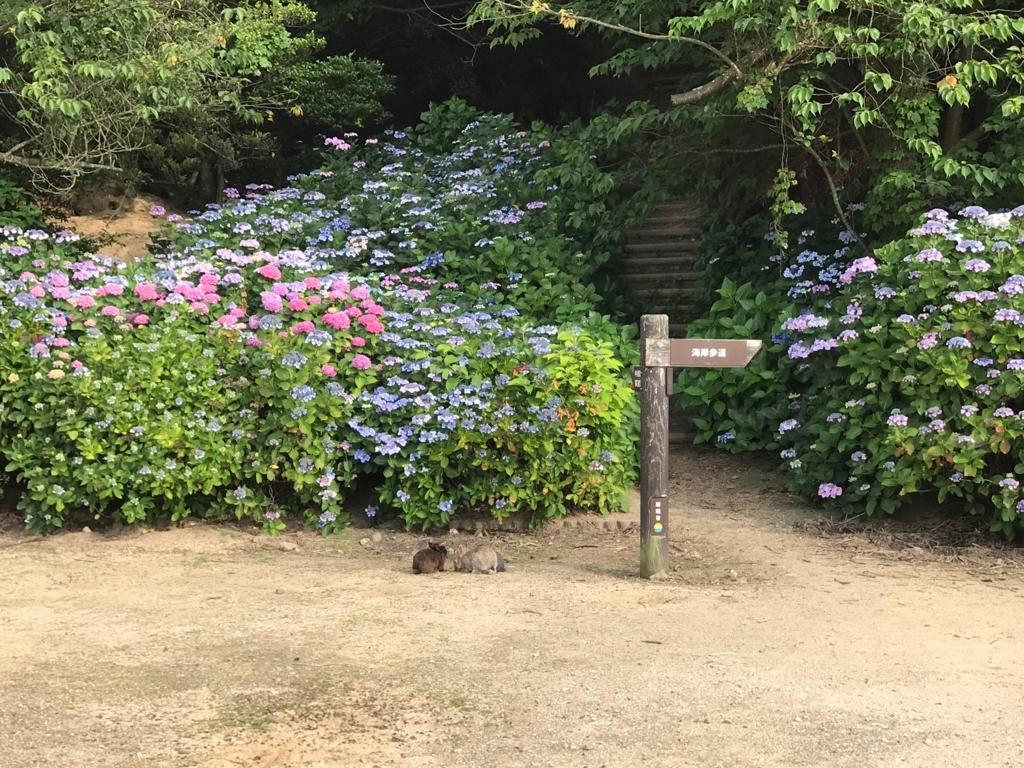2017年6月 うさぎ島(大久野島)紫陽花の頃 グラウンド 展望台への道