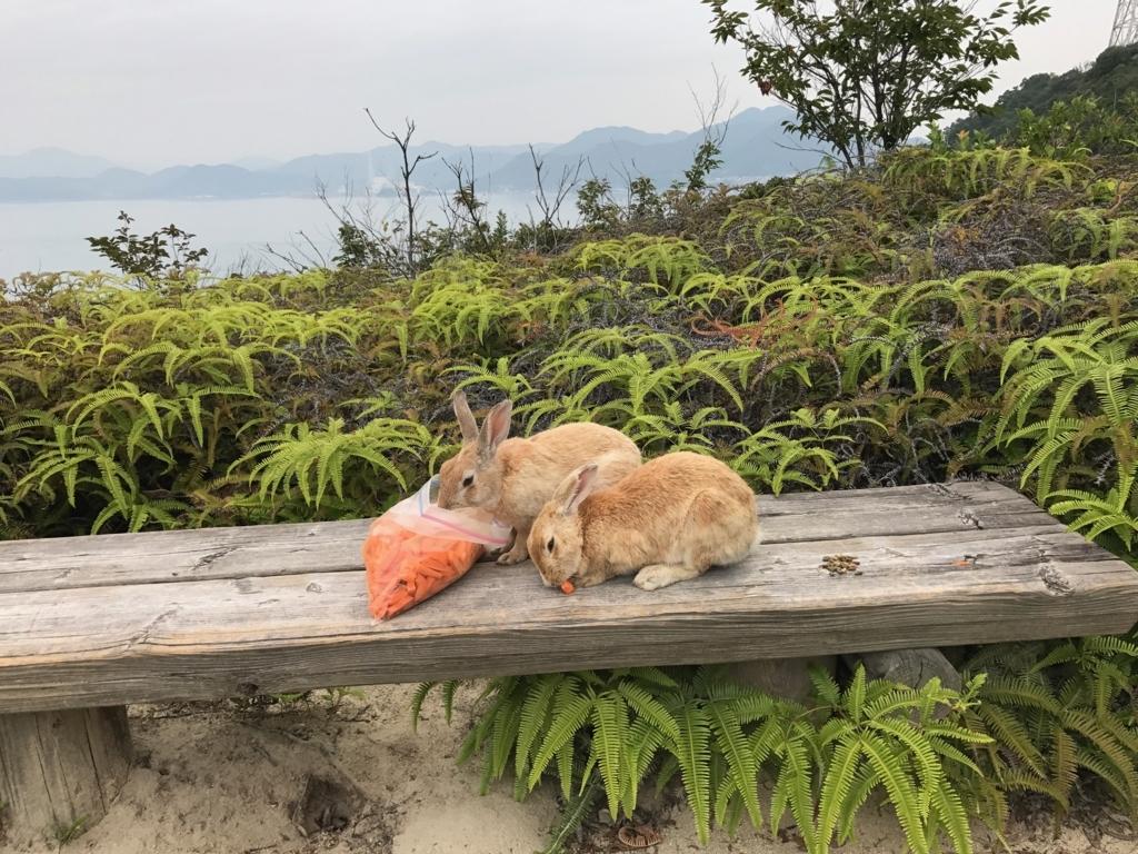2017年6月 広島県 うさぎ島(大久野島)展望台 からの戻り道 人参に夢中なうさぎさん達