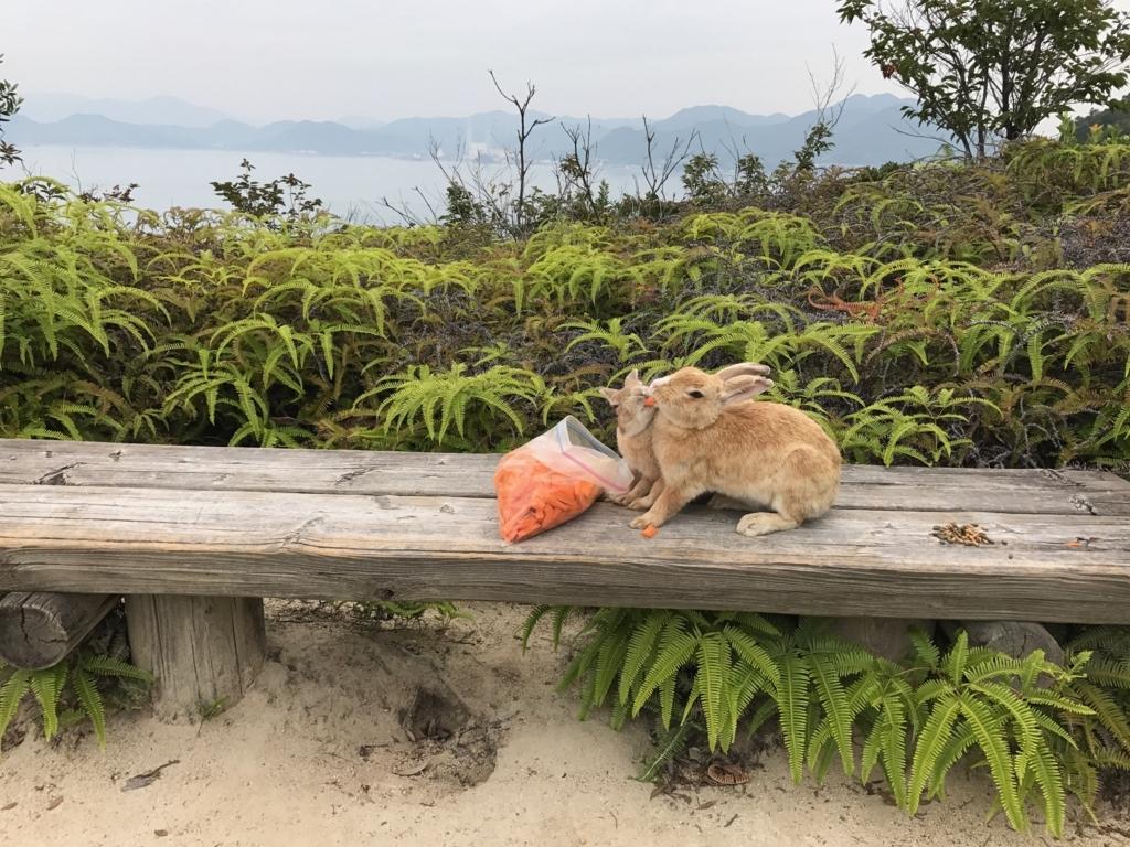017年6月 広島県 うさぎ島(大久野島)展望台 からの戻り道 人参を取り合うさぎさん達