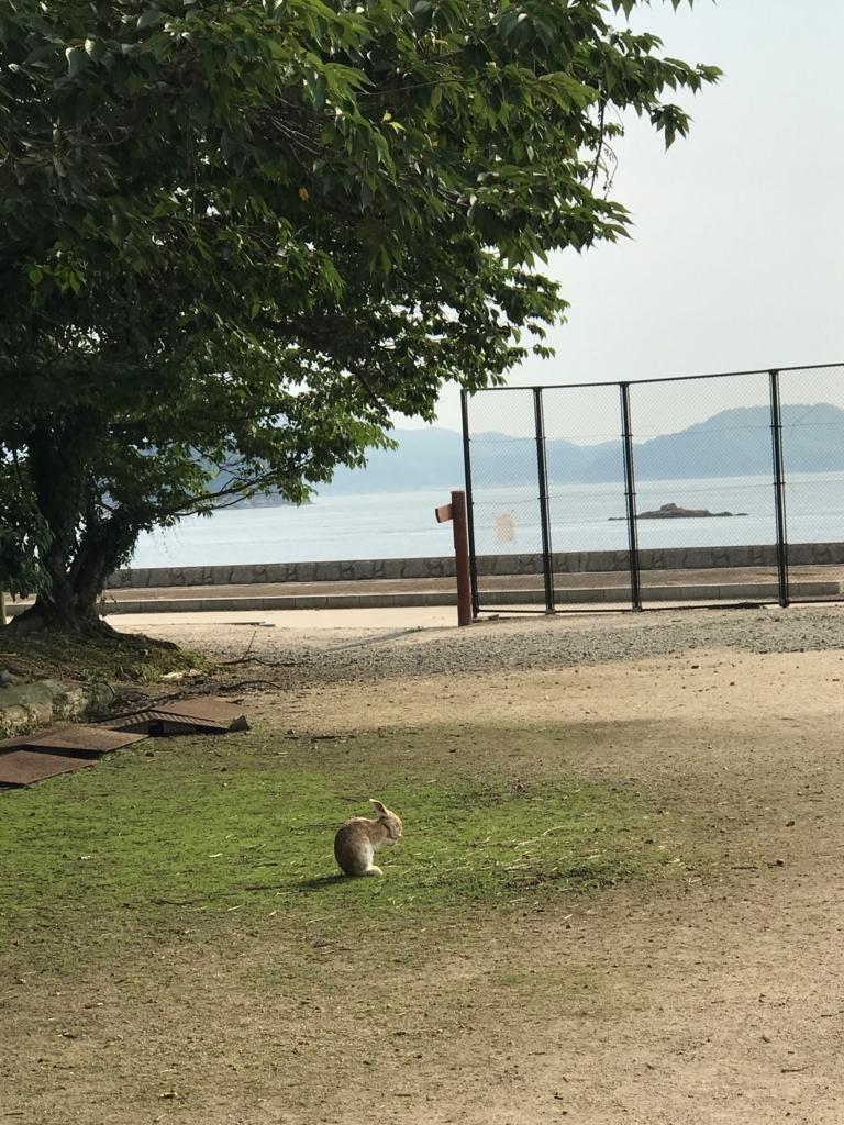 2017年6月 広島県 うさぎ島(大久野島)海を背景に毛づくろい
