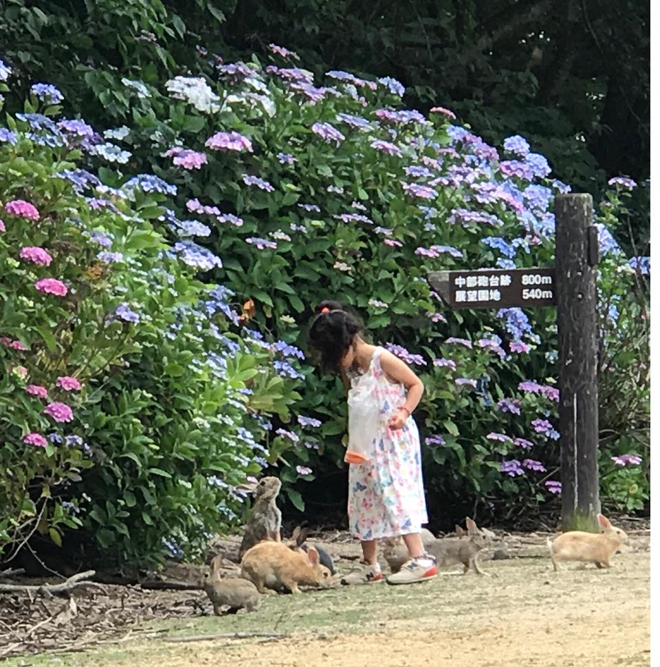 2017年6月 うさぎ島(大久野島)紫陽花の頃 グラウンド お子さんとうさぎさん達