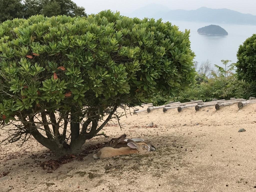 2017年6月 広島県 うさぎ島(大久野島)展望台 うさぎさん達