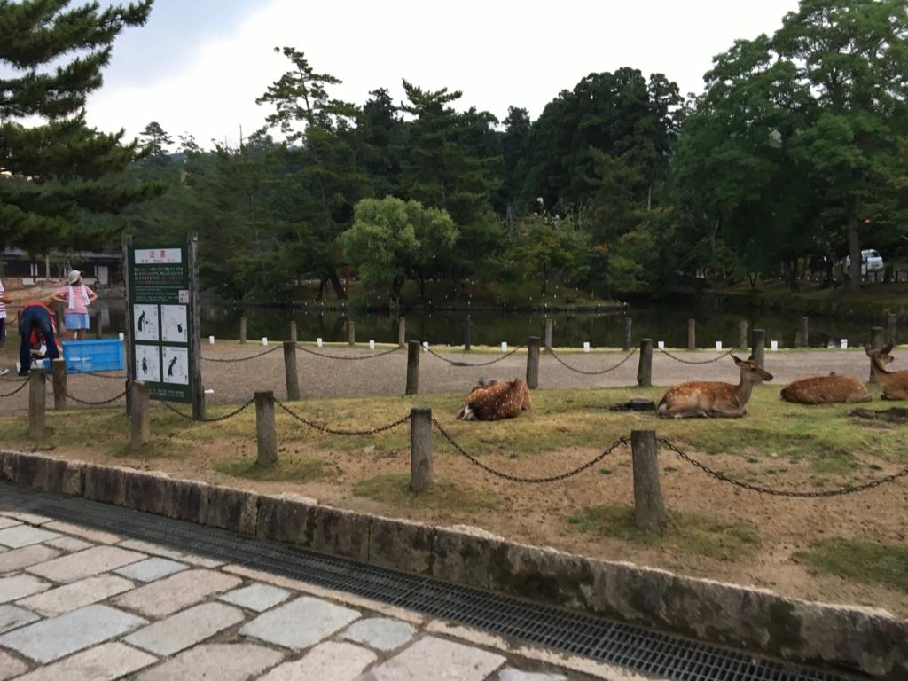 奈良県 東大寺 南大門付近の鹿さん達
