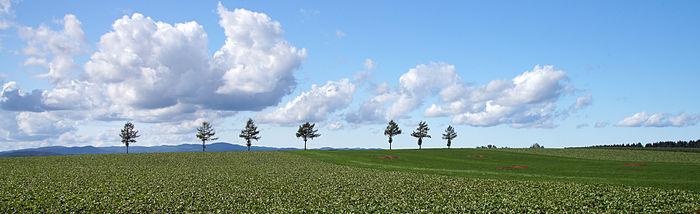 北海道「メルヘンの丘」 by ウィキペディア