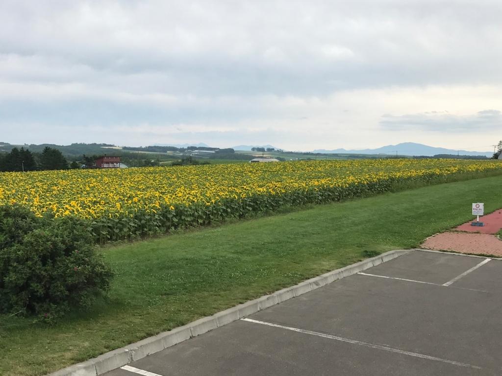 北海道 女満別空港周辺 朝日ヶ丘公園 展望台 から ひまわり畑