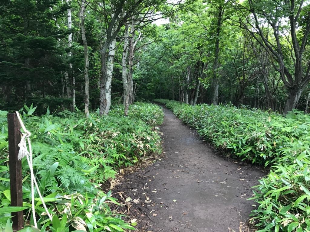 北海道 知床 知床自然センター 横 フレペの滝への遊歩道