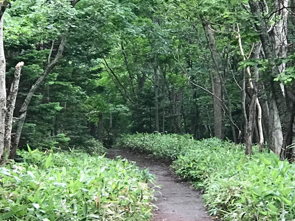 北海道 知床 フレペの滝への遊歩道上での黒い影