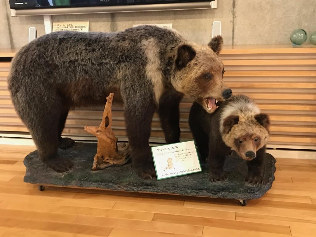 北海道 羅臼ビジターセンター 展示品 親子グマの剝製