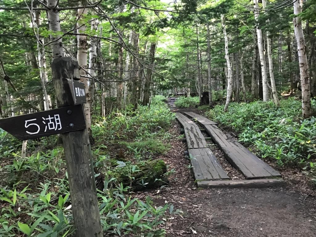 北海道 知床五湖 7月 ヒグマ活動期 限人数制限散策中 五湖周辺