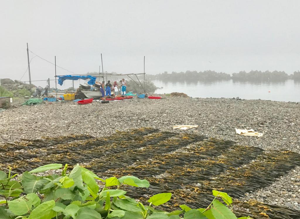 北海道 羅臼 「羅臼の宿 まるみ」近く 早朝の海