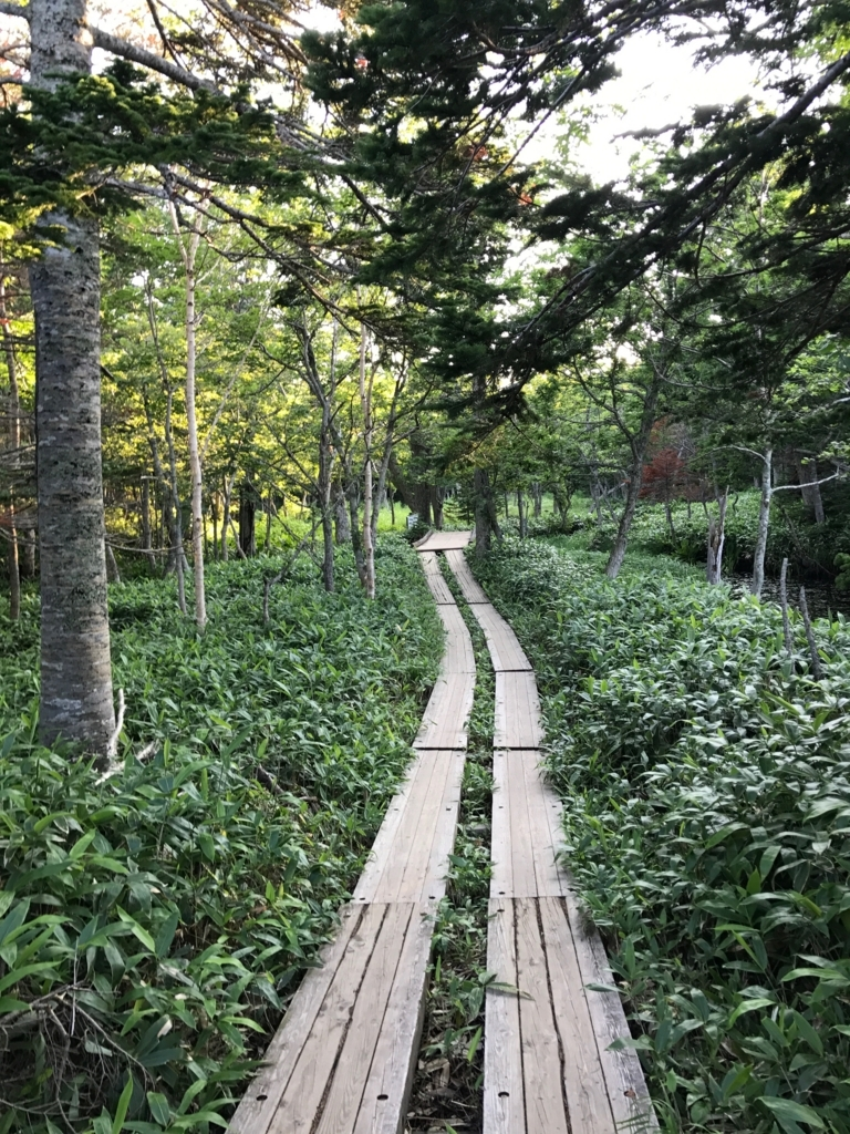 北海道 知床五湖 ヒグマ活動期 地上遊歩道