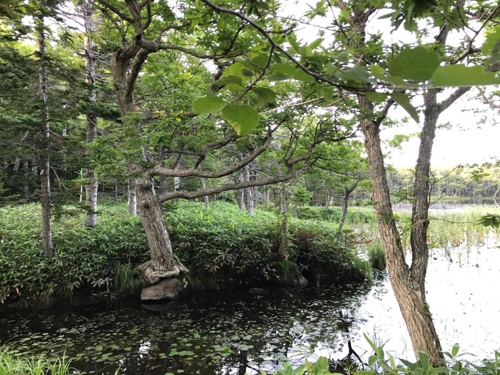 北海道 知床 三湖 ほとり