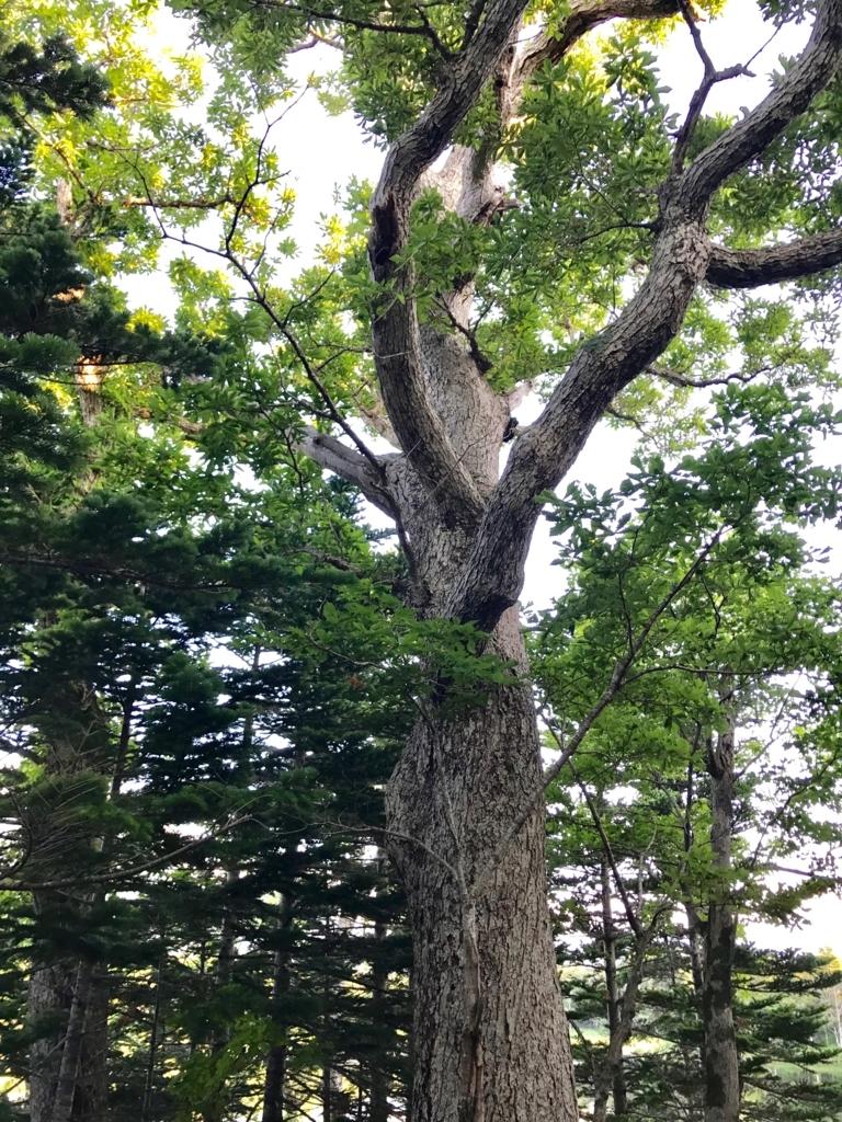 北海道 知床五湖周辺の森