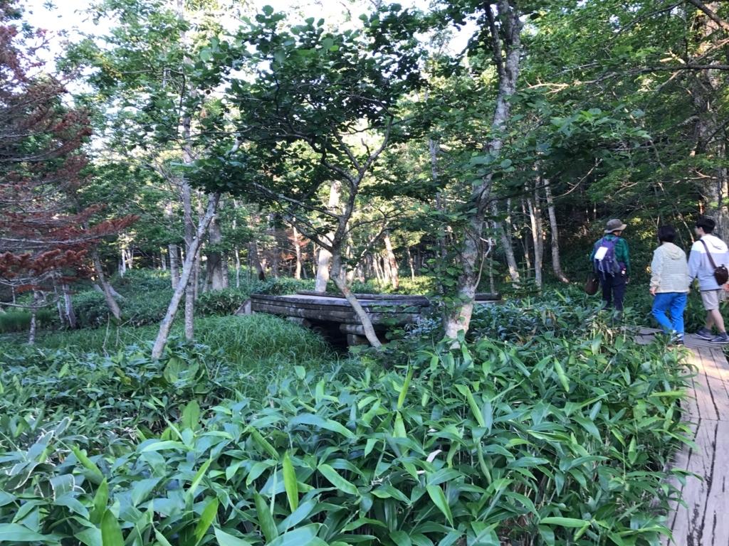 北海道 知床五湖 ガイドさんと地上遊歩道散策