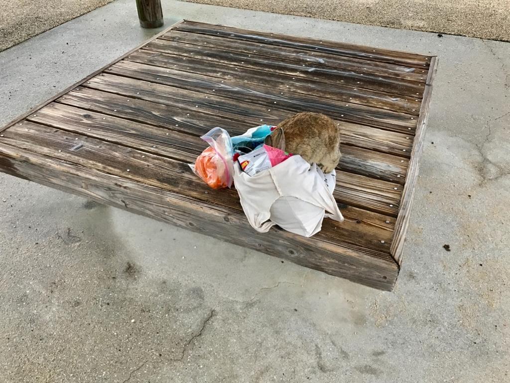 広島県 うさぎ島(大久野島)台風18号接近 前日 海水浴場近くのベンチ 勝手にに食べるうさぎさん