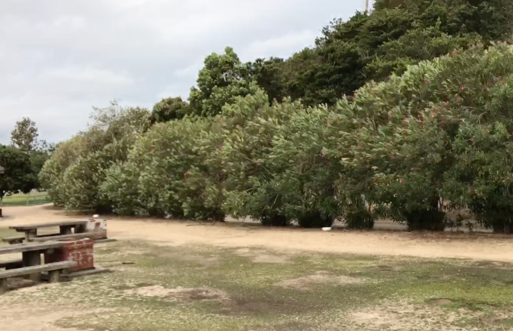 広島県 うさぎ島(大久野島)台風18号午後接近 キャンプ場