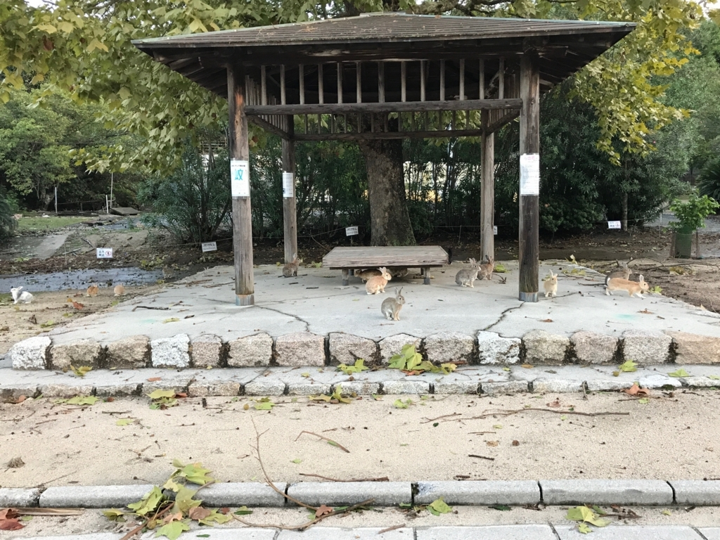 広島県 うさぎ島(大久島)台風18号が去った朝 風で落ちた葉っぱが沢山