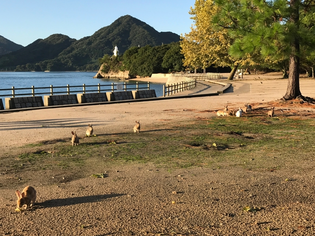 広島県 うさぎ島(大久島)台風18号が去った早朝 いつもの うさぎ島