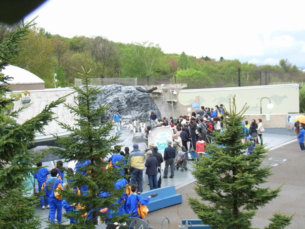 2010年5月 北海道 旭山動物園 ぺんぎん館 外ブース