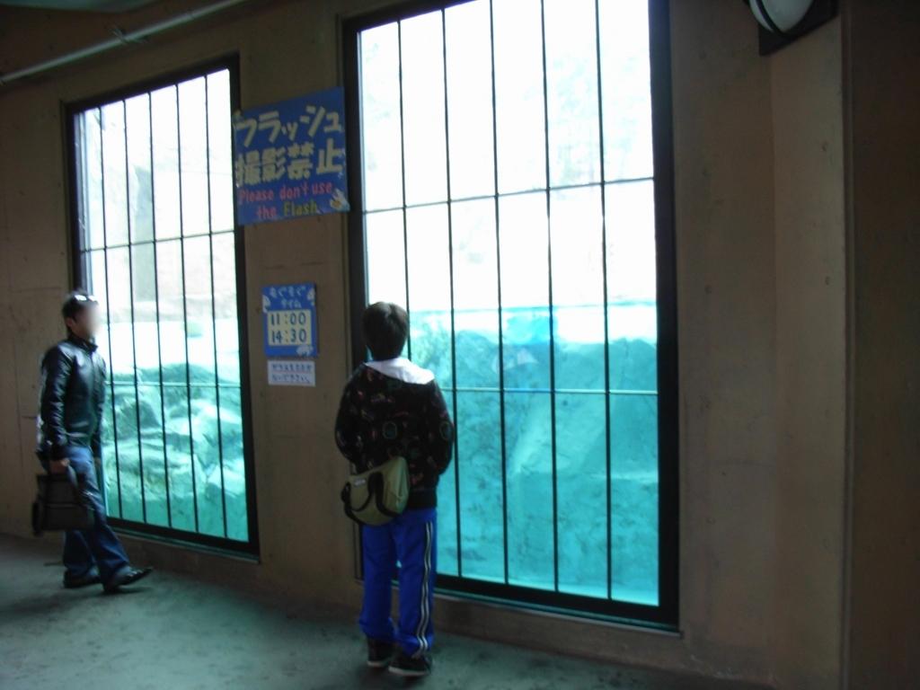 2010年5月 北海道 旭山動物園 ほっきょくぐま館 通常の観察窓