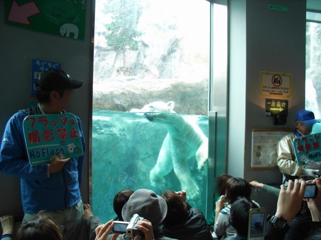 2010年5月 北海道 旭山動物園 ほっきょくぐま館 「モグモグタイム」