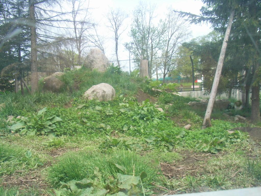 2010年5月 北海道 旭山動物園 オオカミの森