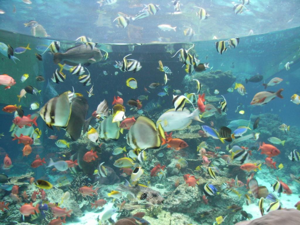 「沖縄美ら海水族館」「サンゴ礁の旅」エリア 熱帯魚水槽