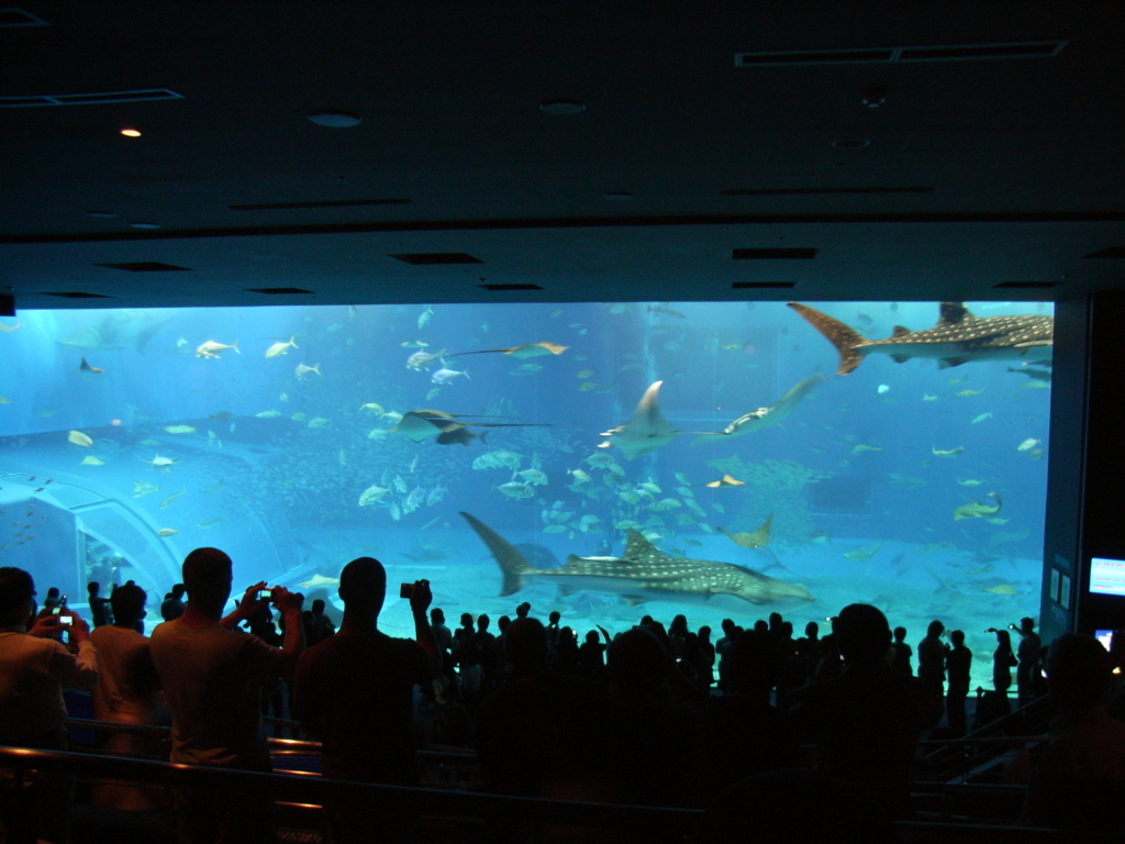 2009年「沖縄美ら海水族館」大水槽「黒潮の海」ジンベイザメ