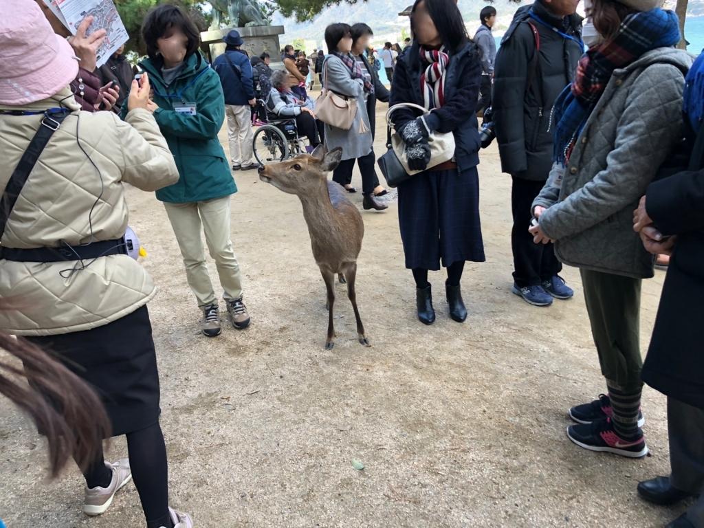 広島県 宮島 厳島神社 鳥居 鹿さんも参加