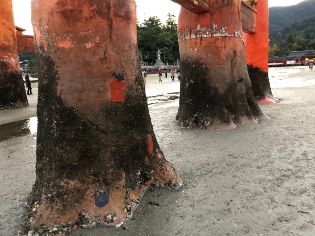 広島県宮島 厳島神社 干潮60cm 干潮後5分後 大鳥居 西側の柱