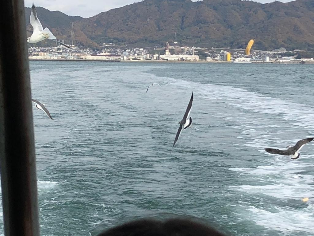 f三原港からうさぎ島へ「ラビットライン」走行中の船尾に たくさんのカモメ