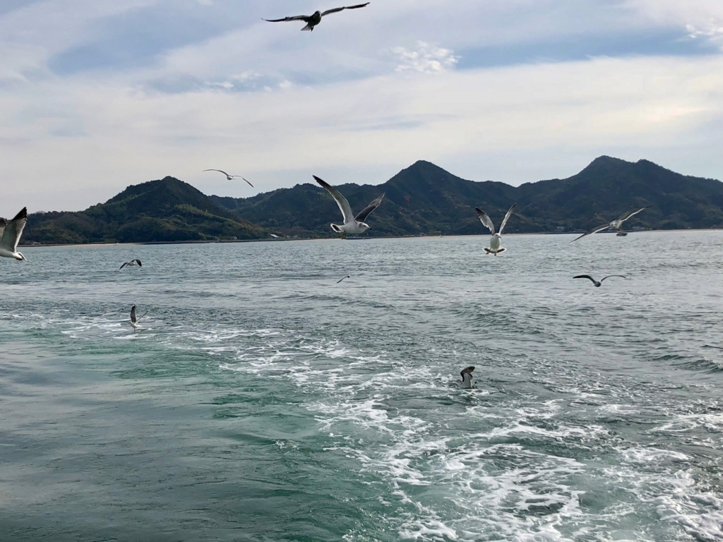 三原港からうさぎ島へ「ラビットライン」走行中 追ってくるカモメ